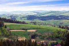 Paisagem do montanhas de Carpathians com abeto e va gramíneo Fotografia de Stock