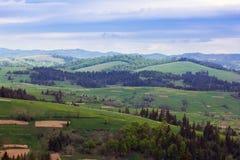 Paisagem do montanhas de Carpathians com abeto e va gramíneo Imagem de Stock