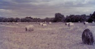 Paisagem do monte de feno no campo vintage Fotos de Stock Royalty Free