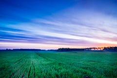 Paisagem do nascer do sol da mola Fotos de Stock