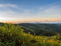 Paisagem do nascer do sol da montanha com florescência do girassol mexicano Fotografia de Stock Royalty Free