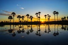 Paisagem do nascer do sol com as palmeiras do açúcar no campo de almofada na manhã Delta de Mekong, Chau Doc, An Giang, Vietname fotografia de stock