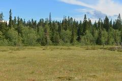 Paisagem do norte com pântano finland imagem de stock royalty free