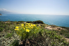 Paisagem do oceano do Wildflower Imagem de Stock Royalty Free