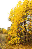 Paisagem do outono Imagem de Stock Royalty Free
