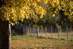 Paisagem do outono imagens de stock royalty free