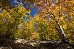 Paisagem do outono Fotos de Stock Royalty Free