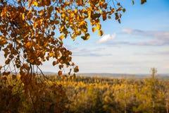 Paisagem do outono do céu azul fotografia de stock royalty free