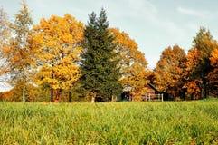Paisagem do outono - casa pequena em árvores amarelas do outono no tempo ensolarado do outono Natureza do outono em tons do vinta Imagens de Stock