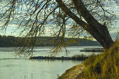 Paisagem do outono com a árvore perto do rio Fotografia de Stock
