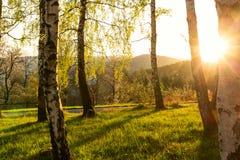 Paisagem do outono com as árvores do outono no parque Natureza do outono - parque amarelado do outono no tempo ensolarado do outo Foto de Stock