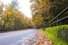 Paisagem do outono com estrada e túnel na floresta Fotografia de Stock Royalty Free