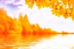 Paisagem do outono com folha colorida brilhante Verão indiano fotos de stock royalty free