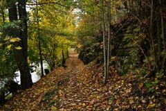 Paisagem do outono com folhas caídas imagem de stock royalty free