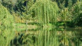 Paisagem do outono com lago Fotos de Stock