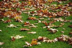 Paisagem do outono como um fundo Fotos de Stock