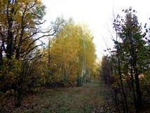 Paisagem do outono da floresta frondosa imagem de stock