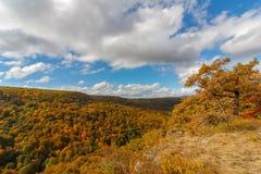 Paisagem do outono das folhas amarelando das árvores na floresta e no céu nebuloso azul Foto de Stock Royalty Free