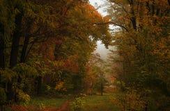 Paisagem do outono, dia nevoento chuvoso nebuloso no parque, seletivo imagem de stock