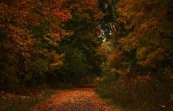 Paisagem do outono, dia nevoento chuvoso nebuloso no parque, seletivo fotos de stock royalty free