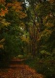 Paisagem do outono, dia nevoento chuvoso nebuloso no parque, seletivo fotografia de stock