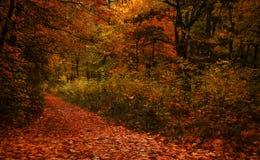 Paisagem do outono, dia nevoento chuvoso nebuloso no parque, seletivo fotografia de stock royalty free