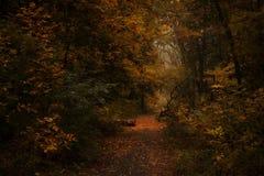 Paisagem do outono, dia nevoento chuvoso nebuloso no parque, seletivo imagem de stock royalty free