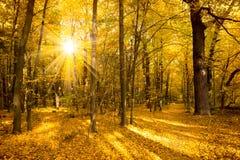 Paisagem do outono do ouro com luz solar e raios de sol imagem de stock