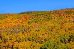 Paisagem do outono em Colorado Fotografia de Stock