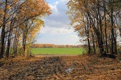 Paisagem do outono em Rússia foto de stock