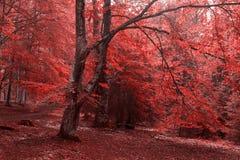 Paisagem do outono na floresta Imagem de Stock