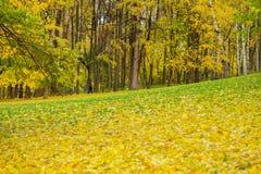 Paisagem do outono no parque da cidade Dia ensolarado morno de outubro, muitos folha caída estações Fundo natural na cor dourada Imagens de Stock