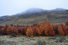 Paisagem do outono no Patagonia Argentina do EL Chalten foto de stock