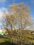 Paisagem do outono, parque do outono dentro com as árvores douradas do outono no tempo ensolarado Imagens de Stock