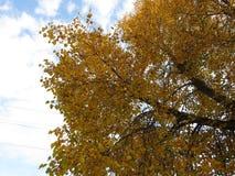 Paisagem do outono, parque do outono dentro com as árvores douradas do outono no tempo ensolarado Fotos de Stock