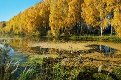 Paisagem do outono, rio e queda dourada fotografia de stock
