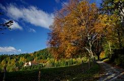 Paisagem do outono sob o céu azul Imagem de Stock