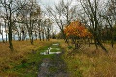 Paisagem do outono - tudo colorido belamente Fotos de Stock