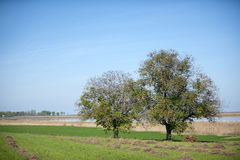 Paisagem do pântano, Carska Bara próximo à Sérvia de Zrenjanin Fotos de Stock Royalty Free