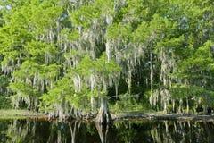 Paisagem do pântano de Florida com cipreste fotografia de stock royalty free
