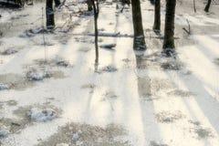 Paisagem do pântano em Alemanha no inverno foto de stock