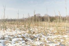 Paisagem do pântano em Alemanha no inverno imagens de stock