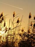Paisagem do pôr-do-sol Imagem de Stock