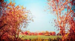 Paisagem do país do outono com árvores, folha e campo Natureza da queda Fotos de Stock Royalty Free