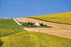 Paisagem do país nos marços (Itália) Imagens de Stock Royalty Free