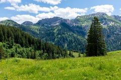 Paisagem do panorama em Baviera com montanhas dos cumes e no prado na mola Fotografia de Stock