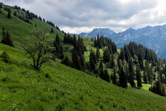 Paisagem do panorama em Baviera com montanhas dos cumes e no prado na mola Foto de Stock Royalty Free