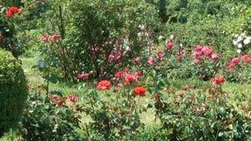 Paisagem do parque com flor dos arbustos cor-de-rosa vídeos de arquivo