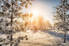 Paisagem do parque do inverno no nascer do sol Fotografia de Stock Royalty Free
