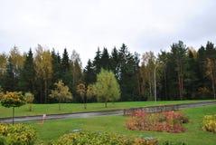 Paisagem do parque do outono Imagem de Stock
